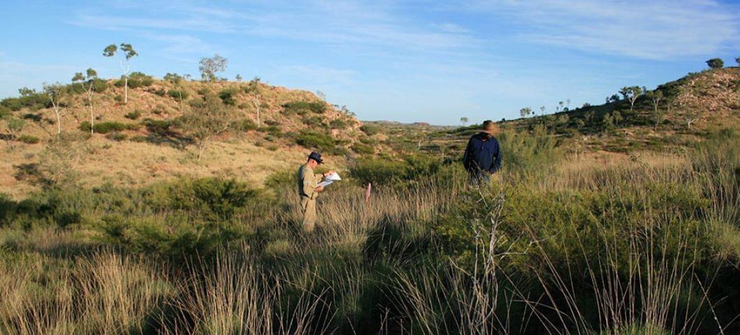 Surveying in Yullana country